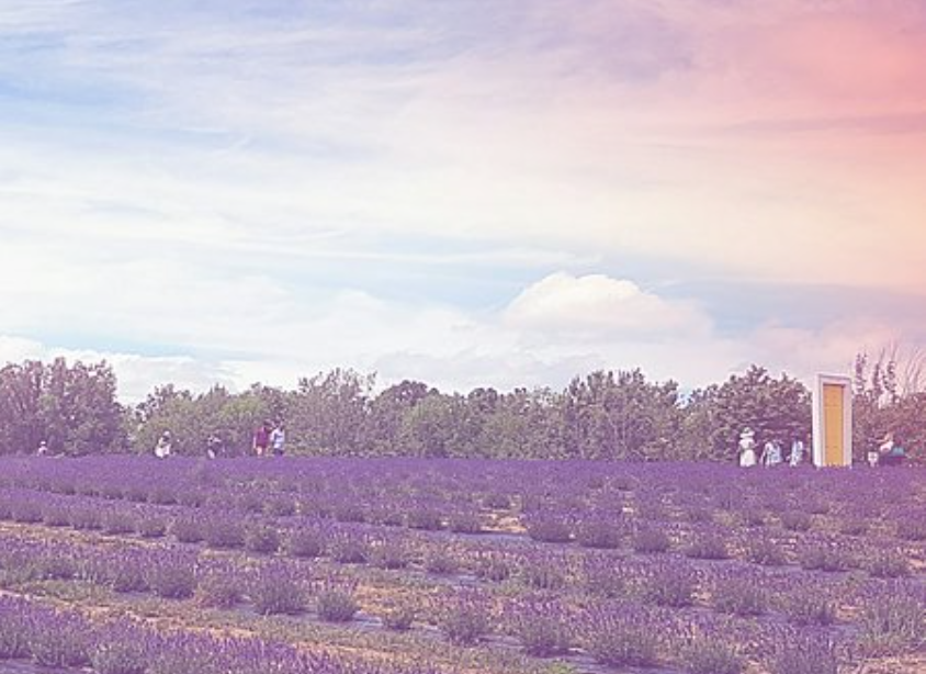 You Have To Visit This Beautiful Lavender Field